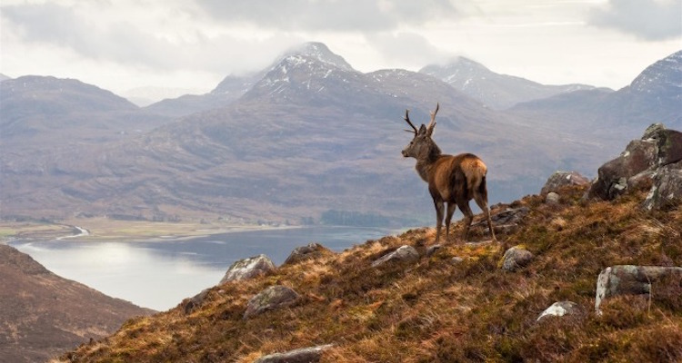 Scotland's incredible nature