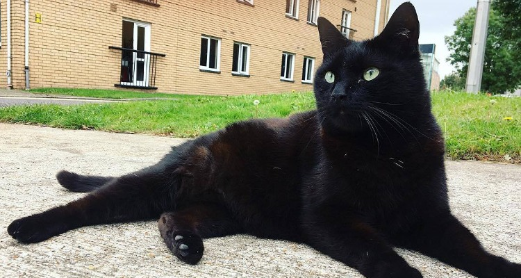 All black cat at University of Westminster Harrow Campus